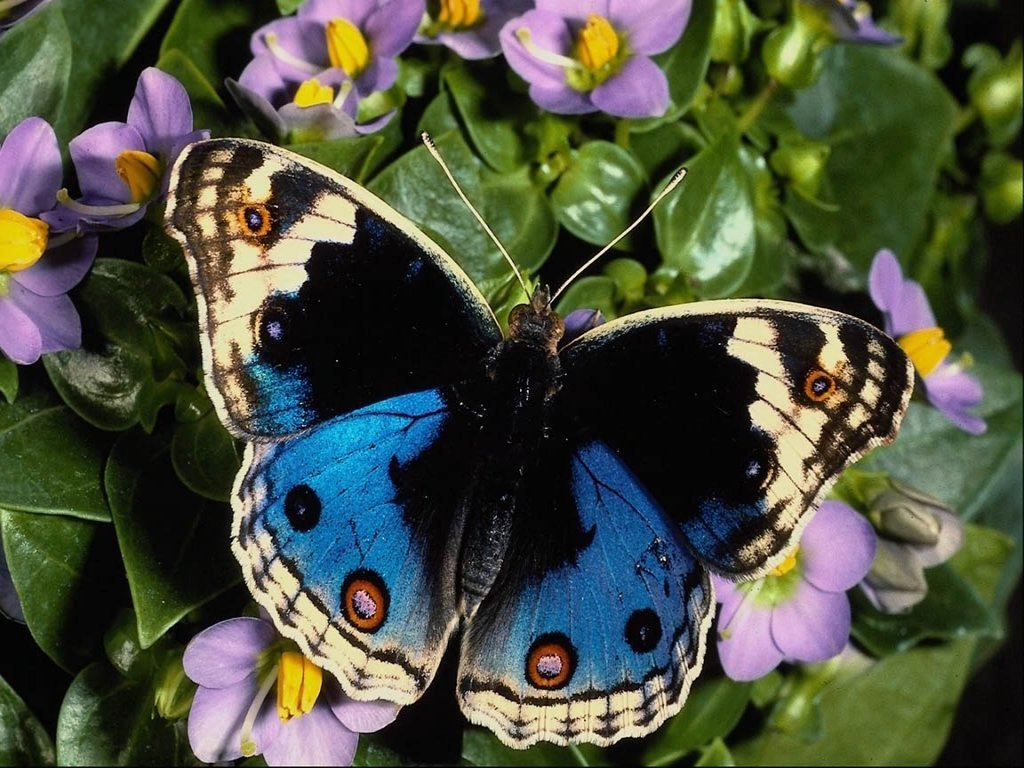 This butterfly 621 wallpaper viewed 22602 persons