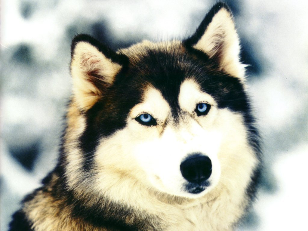 This dog 648 wallpaper viewed 25481 persons