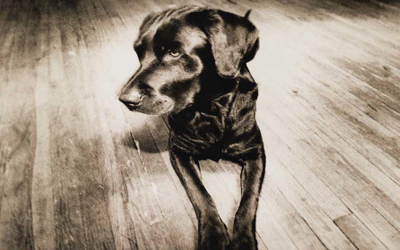 Windows XP Dog