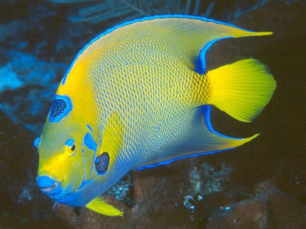 Fish wallpapers images and animals fish pictures 670 for All about fish