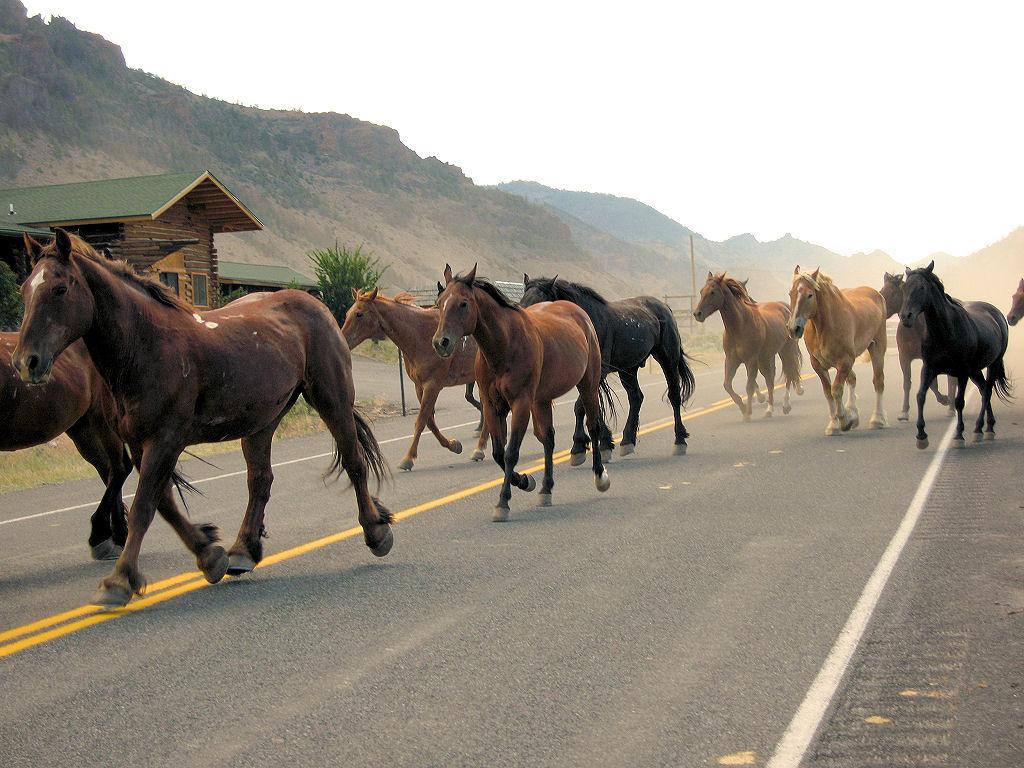 War Horse  UK tour of War Horse