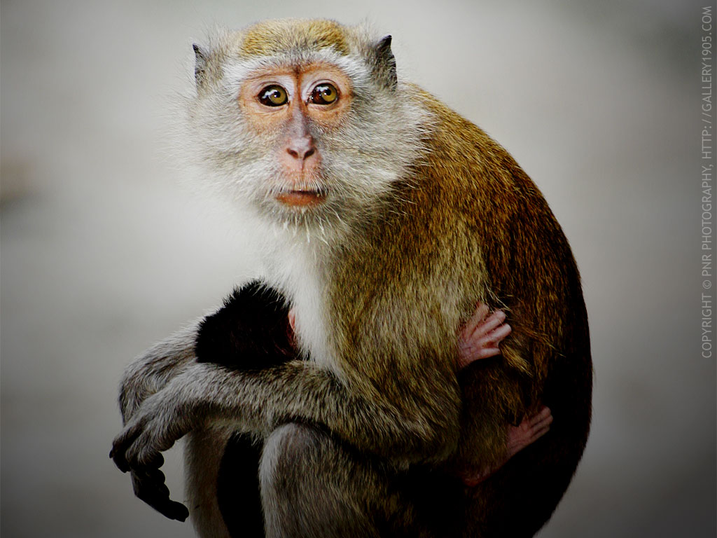 Monkey Wallpapers Images And Animals Monkey Pictures 707
